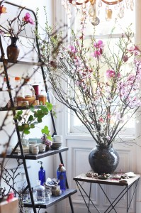 louesa-shelf